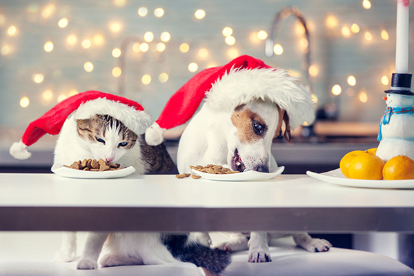 A cat and dog eating food with Santa hats on.