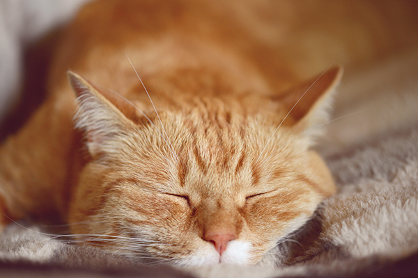 """An orange tabby cat with an """"M"""" marking on his forehead."""