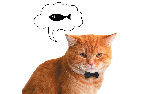 An orange tabby cat in a bowtie thinking about fish and food.