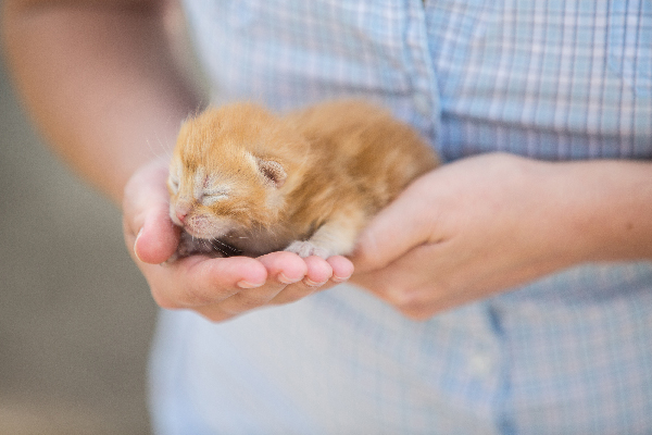 An orange tabby kitten with his eyes closed.