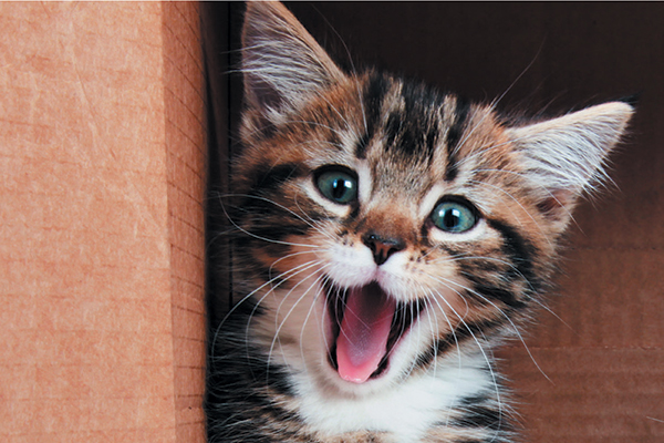 Meowing is among the most common cat noises.