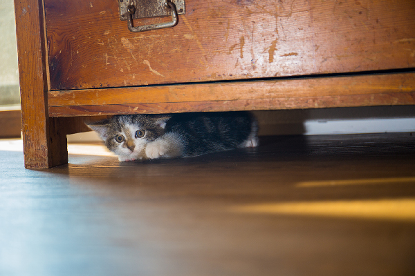 Cat hiding under a dresser looking scared.
