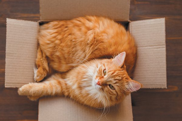 A cat hanging around in a box is another weird cat behavior that raises some questions. Photography ©Aksenovko | Getty Images.