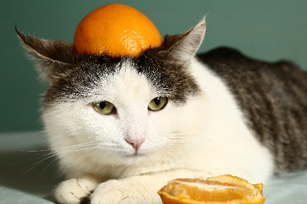 A silly cat wearing an orange peel on his head.