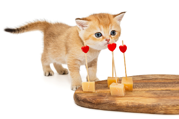 An orange tabby kitten sniffing at a cheese board with small hearts on it.