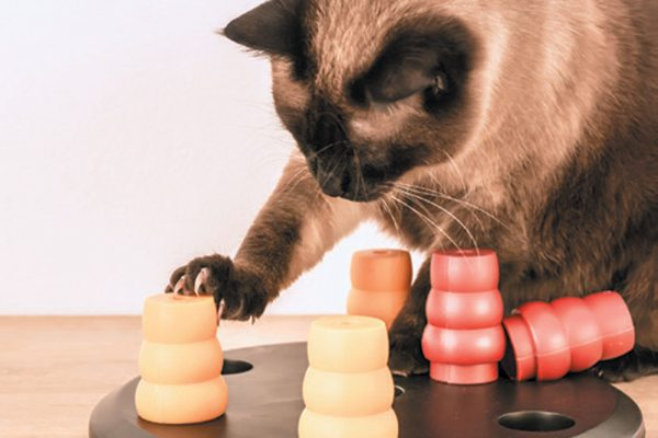 Games are important if your cat does not have much human company. Photography © kicia_papuga | Getty.
