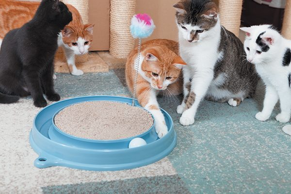 No matter what the play activity is, cats prefer multiple shorter sessions. Photography ©w-ings | Getty Images.