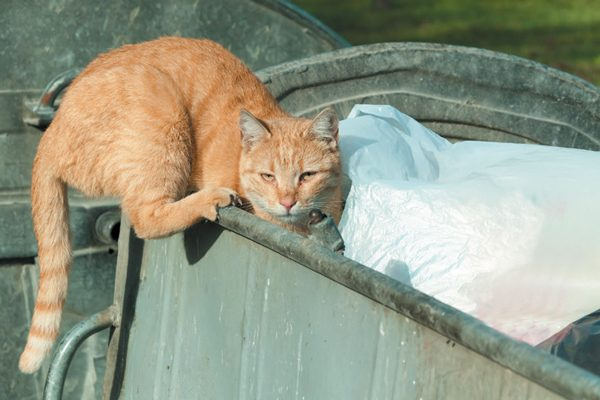 Stopping a feral cat is easier than managing a feral colony. Photography ©Srdjanns74 | Getty Images.