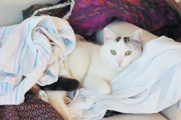 A cat on a pile of clothes, laundry.