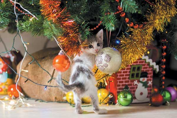 Pine is highly toxic to cats. Photography ©FaST_9| Getty Images.