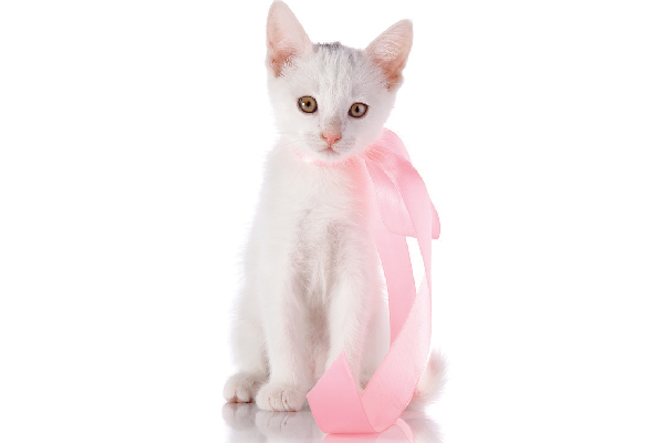 A girl cat with a ribbon or bow.