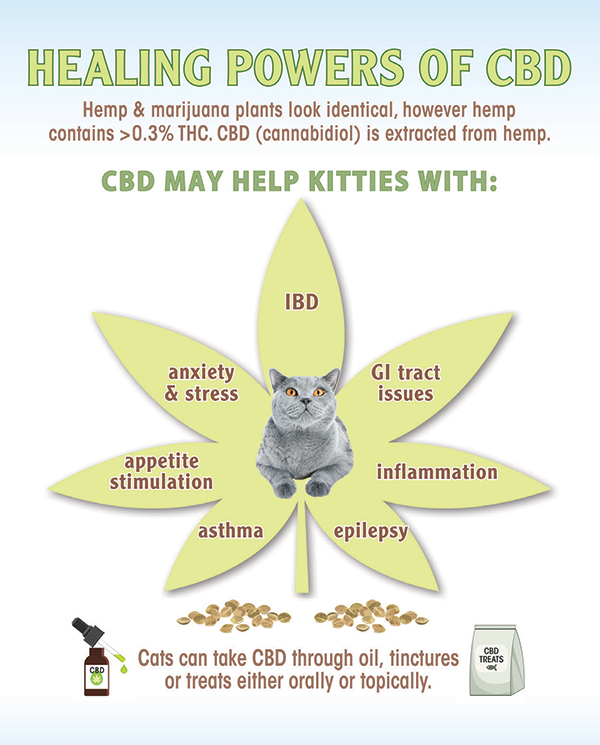 CBD oil for cats.