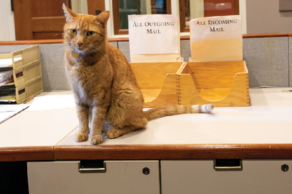 Remy the Humanities Cat.
