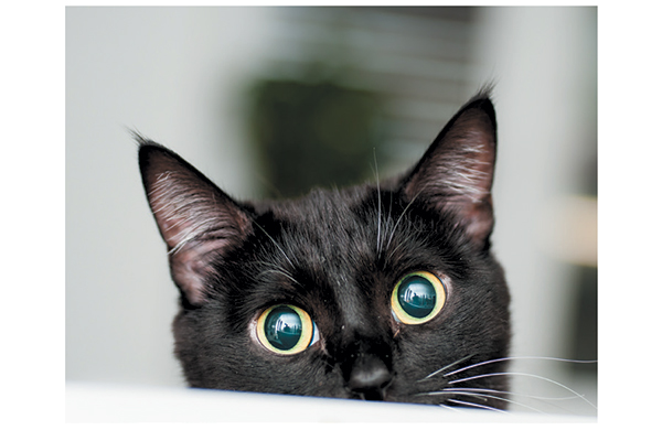Cat staring at the camera. Photography by: ©oksy001 | Getty Images