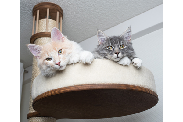 Two cats enjoying the view atop their cat tree. Photography by: ©Nils Jacobi | Getty Images