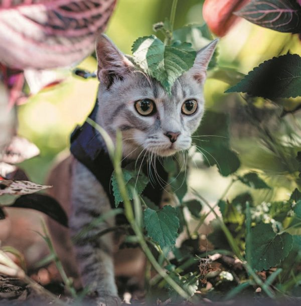 Philbrook Cat 1