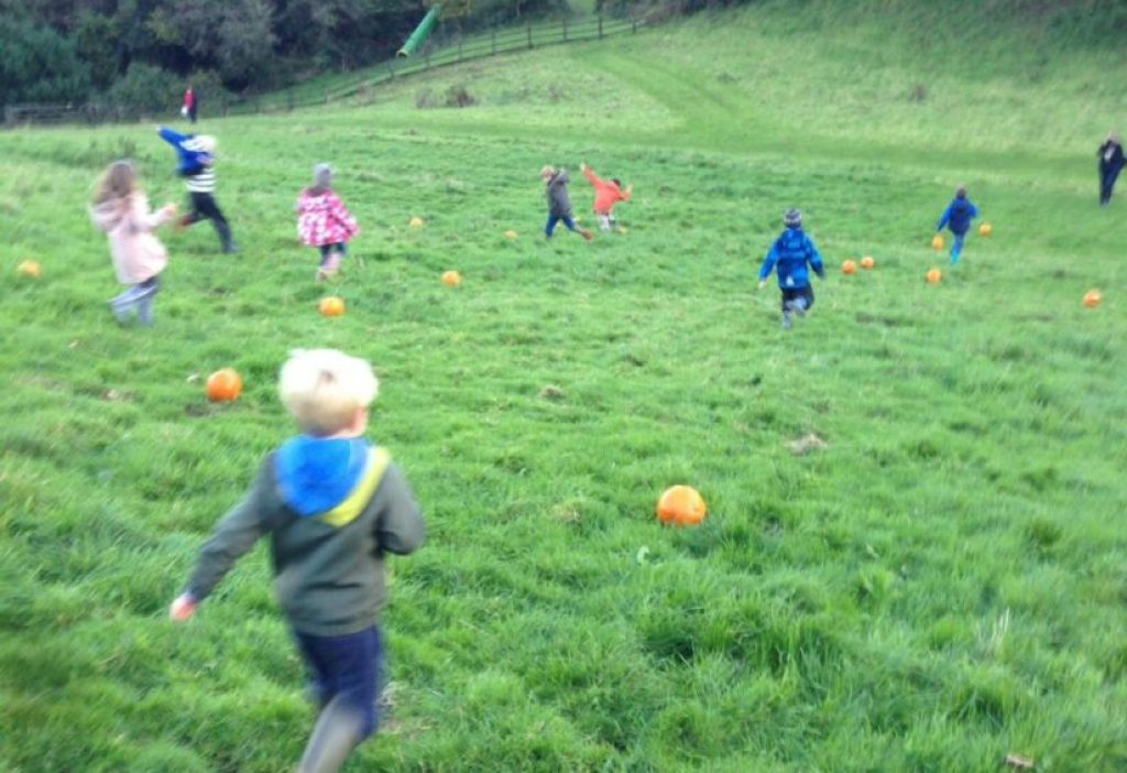 Pumpkin rolling wild kids bosinver cornwall review