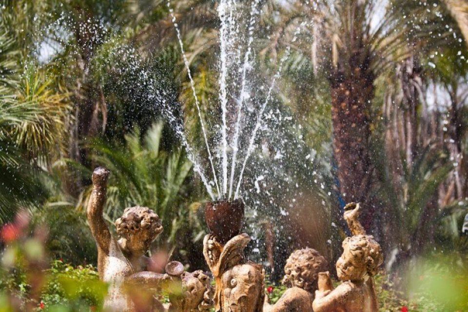 How to create a Mediterranean garden plants