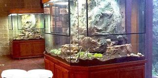 cat-kayu-untuk-aquarium