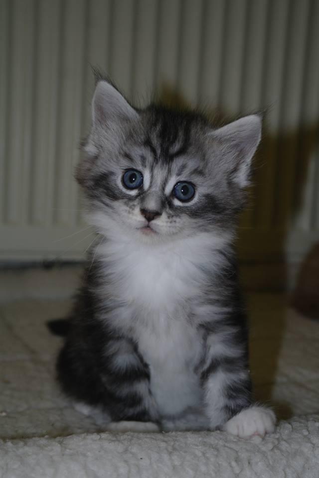 Harley als kitten 2