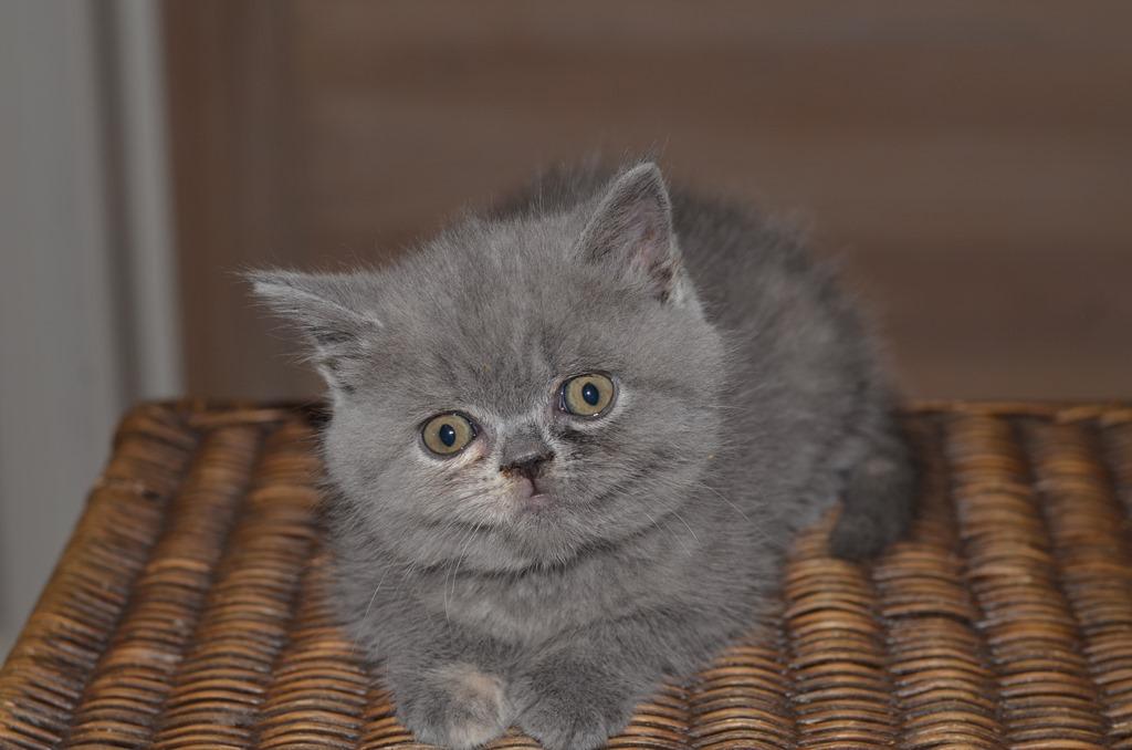 nieuwe foto's van de kittens van nelleke