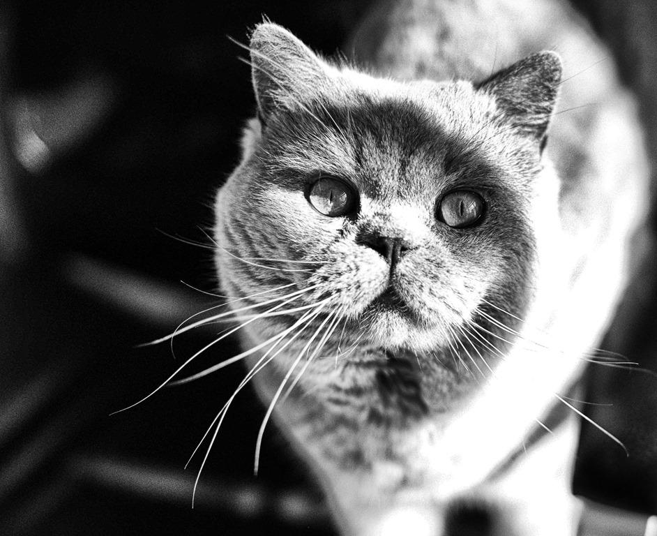 Foto's van onze katten, gemaakt door een kunstfotografe voor een kalender die verkocht zal worden tvv vzw Poezenmoeders