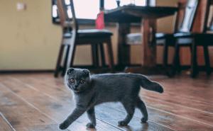 Are Female Cats Territorial?