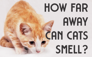 How Far Away Can Cats Smell?