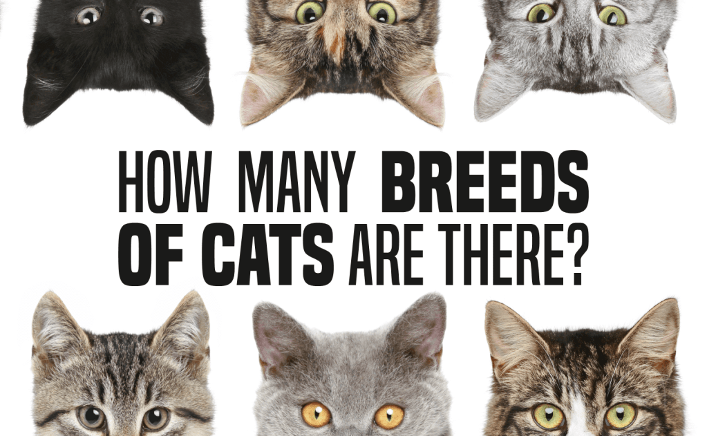 How Many Breeds of Cats Are There?