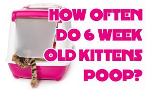 How Often Do 6 Week Old Kittens Poop?
