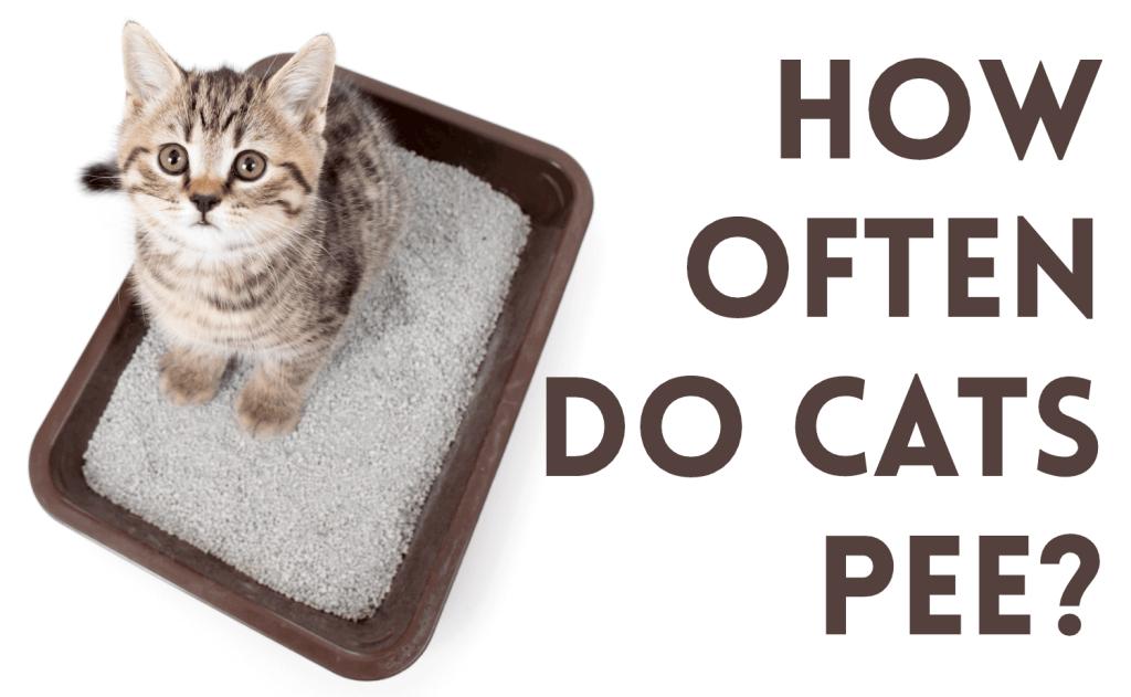 How Often Do Cats Pee?