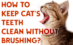 How To Keep Cats' Teeth Clean Without Brushing?