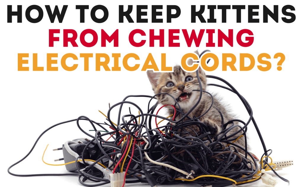 How to Keep Kittens From Chewing Electrical Cords?