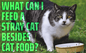 What Can I Feed a Stray Cat Besides Cat Food?