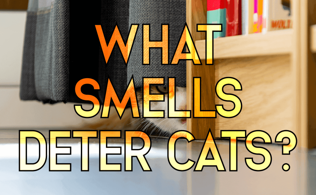 What Smells Deter Cats?