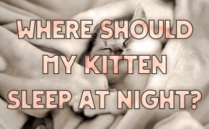 Where Should My Kitten Sleep at Night?