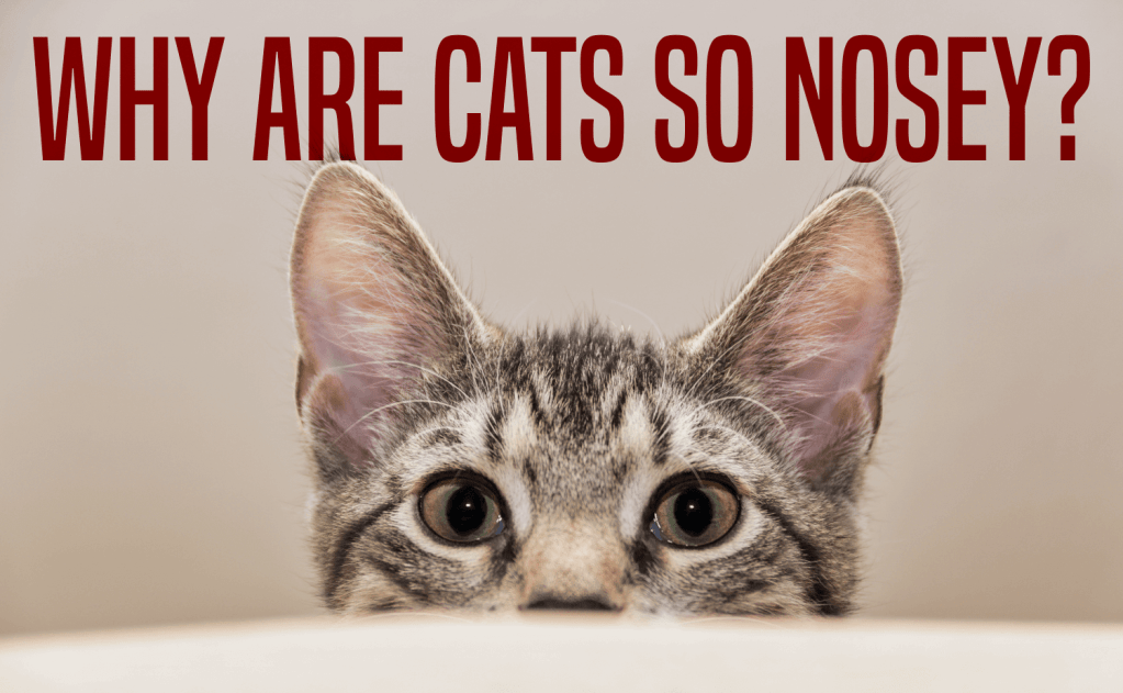 Why Are Cats So Nosey?