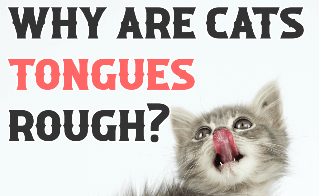 Why Are Cats' Tongues Rough?