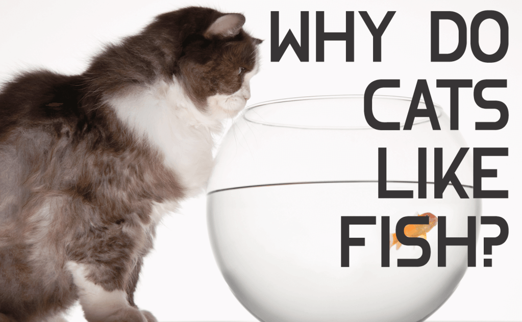 Why Do Cats Like Fish?