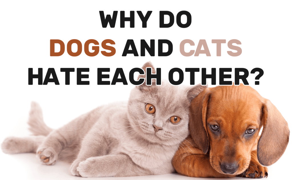 Why Do Dogs and Cats Hate Each Other?