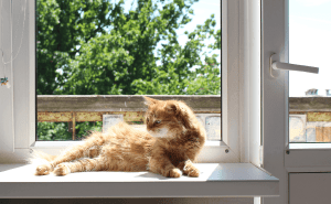 How Hot Is Too Hot for Cats Indoors?