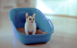 How Often Do Cats Pee In a Day?