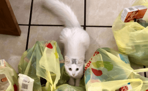 Why Do Cats Lick Plastic Grocery Bags?
