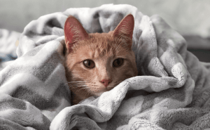 Why Do Cats Pee On Clothes?