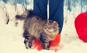 Why Do Cats Rub Against Your Legs?