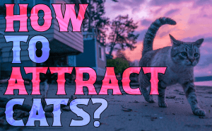 How To Attract Cats?