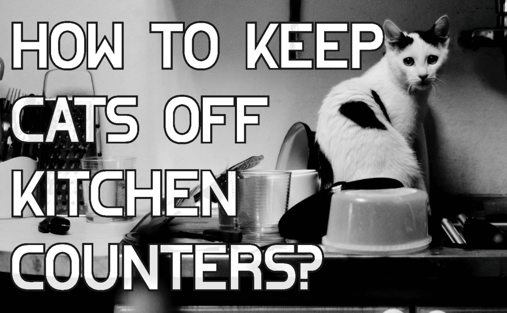 How To Keep Cats Off Kitchen Counters?