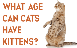 What Age Can Cats Have Kittens?