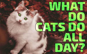 What Do Cats Do All Day?