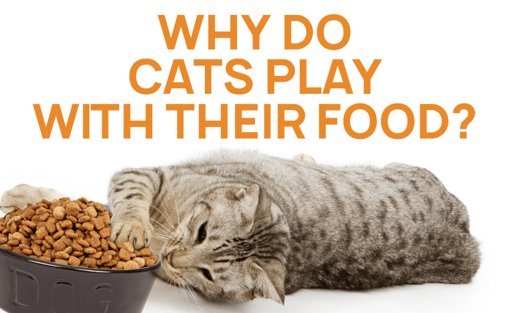 Why Do Cats Play With Their Food?